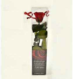 Mini rose in case