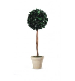 Hedera ball with trunk
