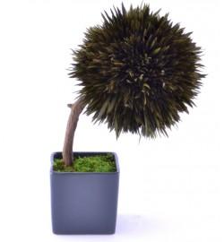 Arrangement tree Salignum